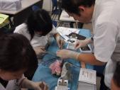 <外科1>縫合手技の練習風景
