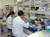 <循環病態学>ラボでの大学院生の実験風景