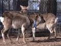 平成26年度放送公開講座 第4回「野生動物との共存 今できること」