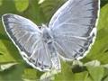 平成26年度放送公開講座 第5回「絶滅危惧種のチョウを守れ!生物多様性の保全へ」