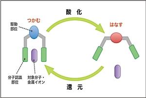 酸化還元駆動型分子ピンセットの模式図