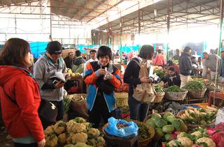 野菜市場を調査中
