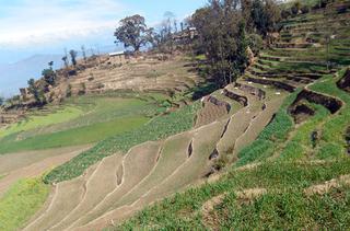 ネパールの棚田