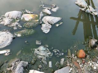 大量のゴミが投棄された河川