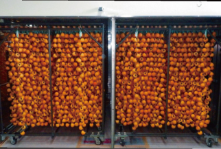 乾燥室内での市田柿