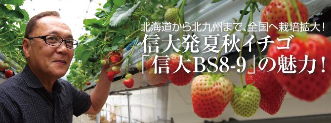 夏秋イチゴ「信大BS8-9」