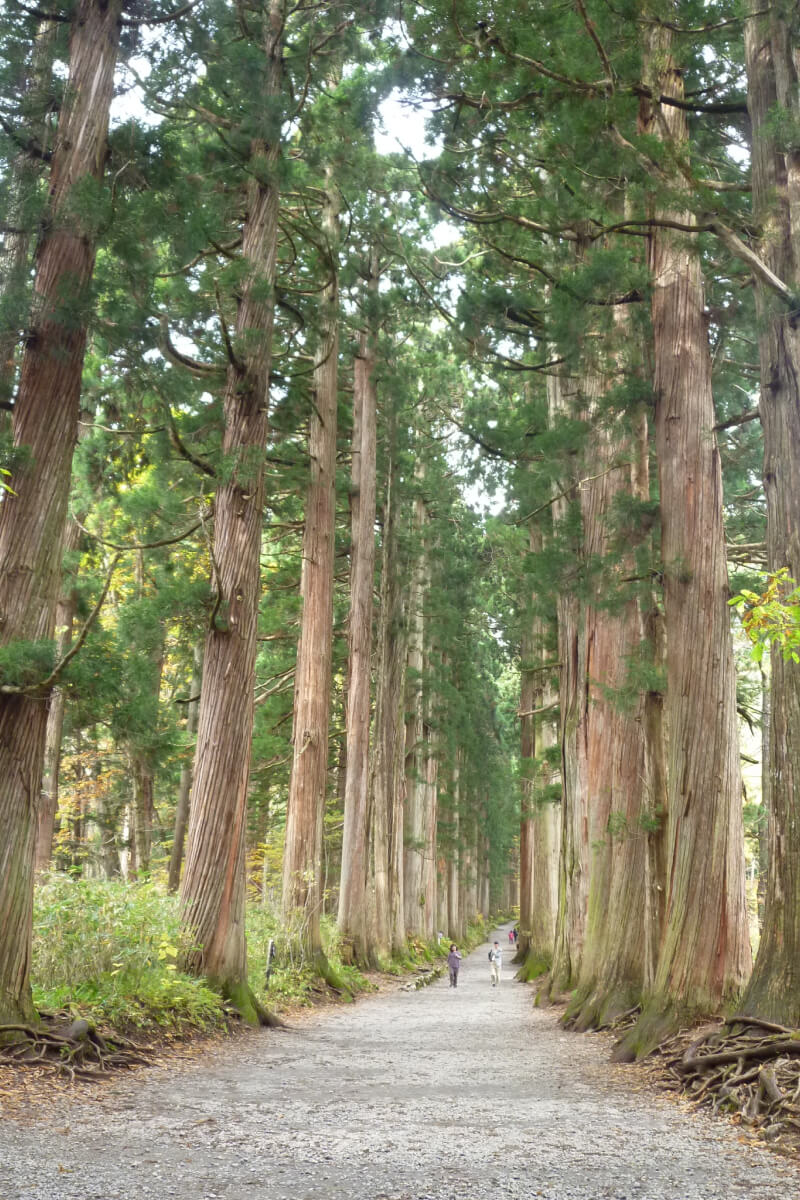 Cedar Avenue of Togakushi