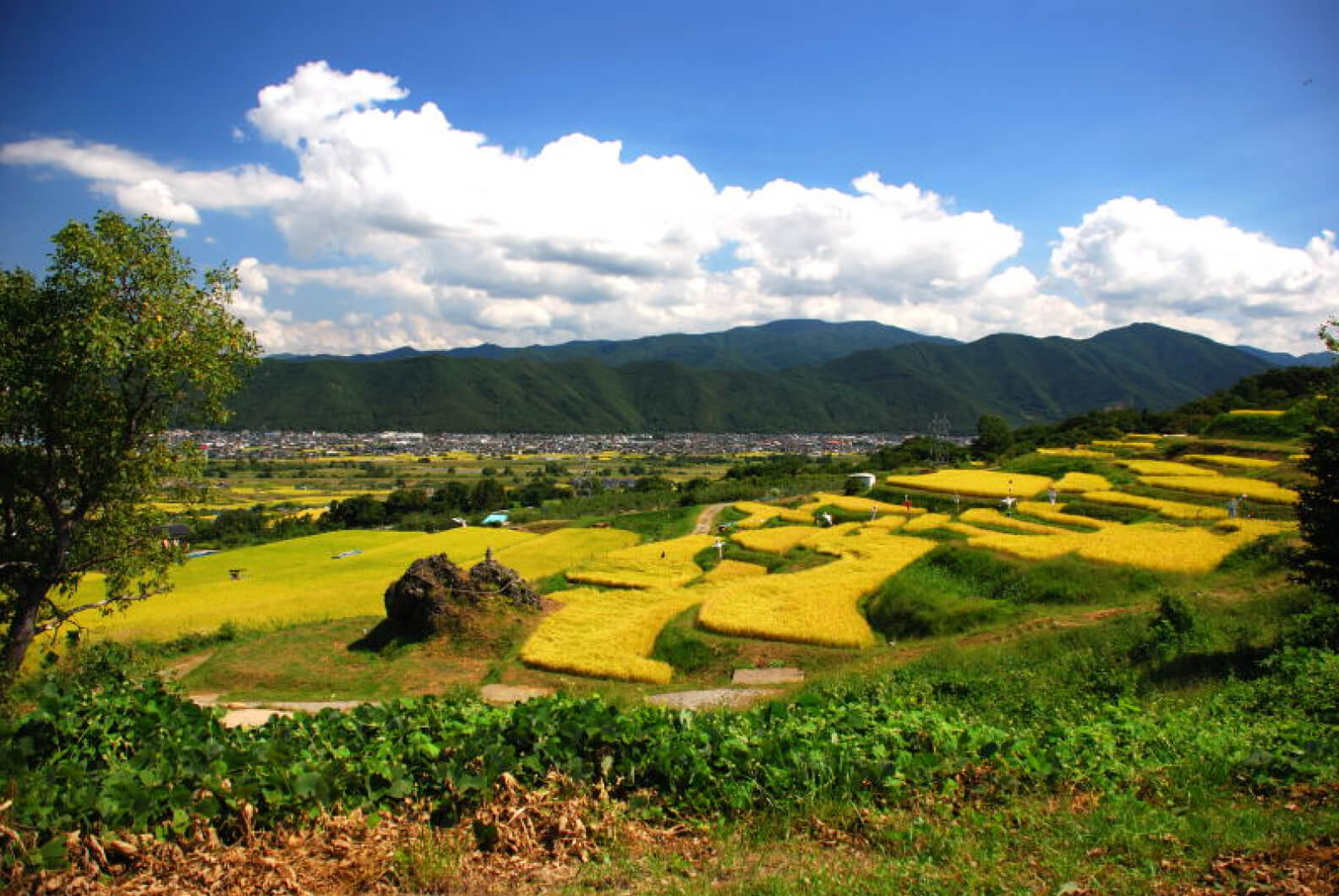 Terraced Rice Fields of Obasute