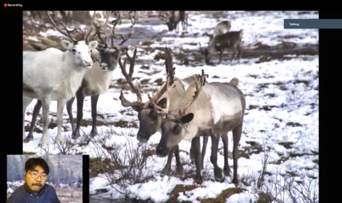 20200731_Reindeer.png