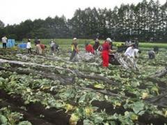 収穫後の圃場管理