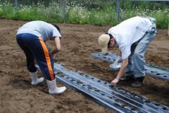 圃場でのダイコンの播種作業に挑戦