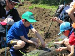 サツマイモの苗植え