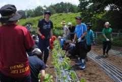 ハクサイの巨大苗の定植に挑戦