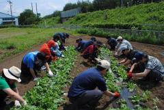 ダイコン圃場の草取りに挑戦