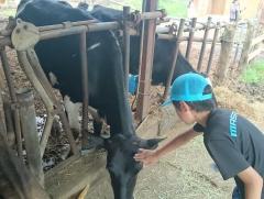 牛との触れ合い