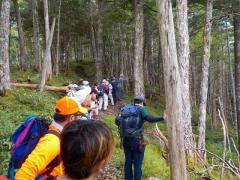 西駒ステーションの亜高山帯常緑針葉樹林