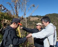 ネパール、ラリトプール郡ダルチョキ村にてアカザ属植物の種子を採種する根本助教、松島准教授、ギミレ研究員(ネパールジーンバンク)