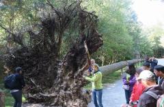 「森の家」にて高さ40mの風倒木を教材として学ぶ
