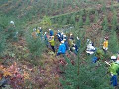 広い造林地からAIを使い苗木だけを自動抽出