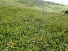 霧ヶ峰における調査地区の半自然草原の様子