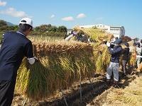 新米の収穫