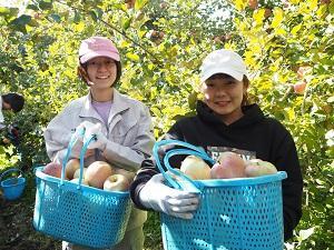 りんごの収穫.JPG