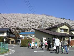 2010春弘法山①.JPG