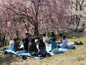 2010春弘法山②【再度補正版2】.jpg