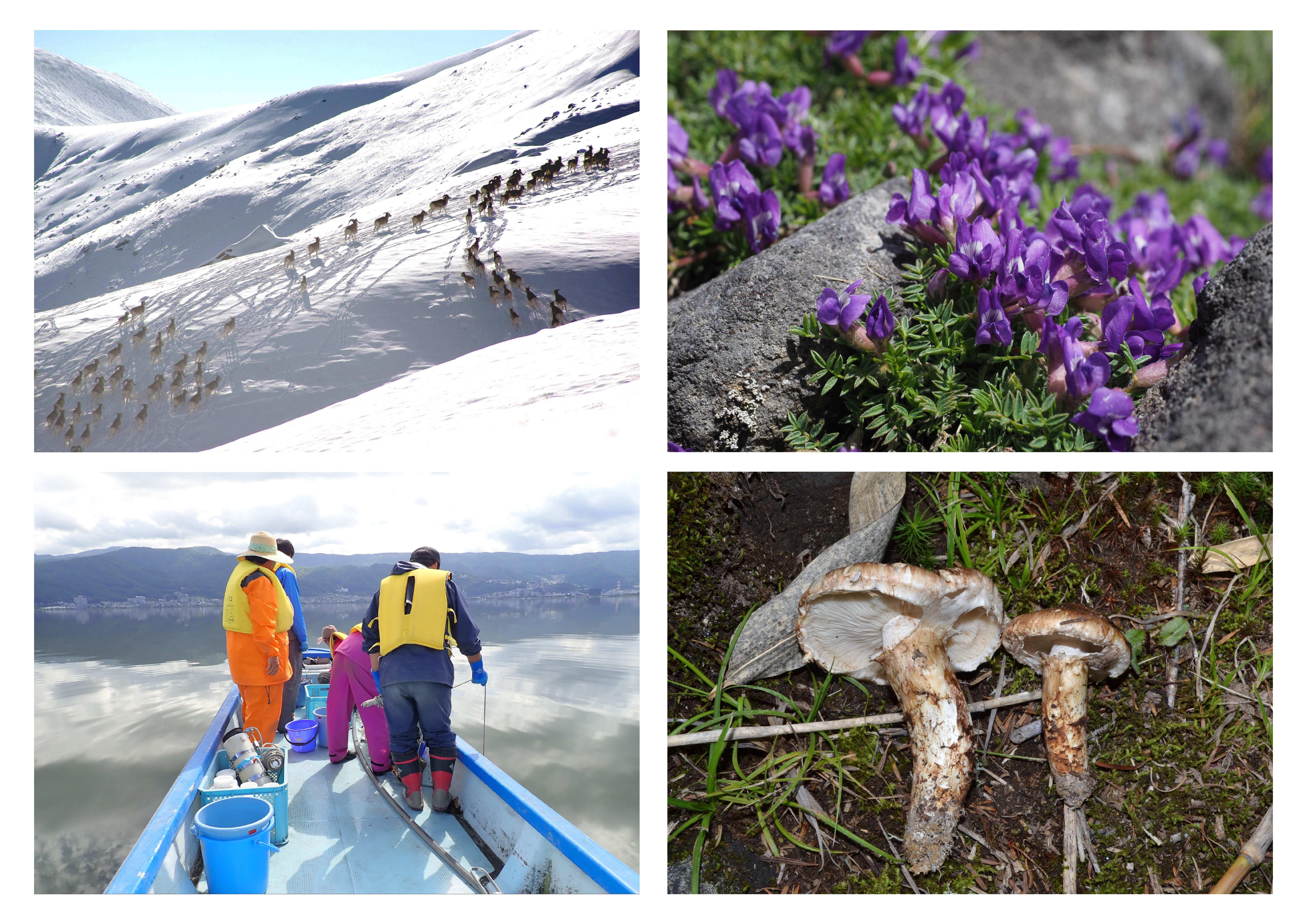 山岳生態系研究部門