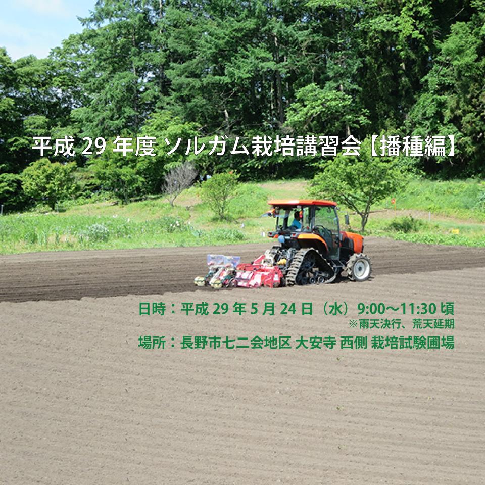 アイキャッチ画像:【開催告知】平成29年度 ソルガム栽培講習会(播種編)