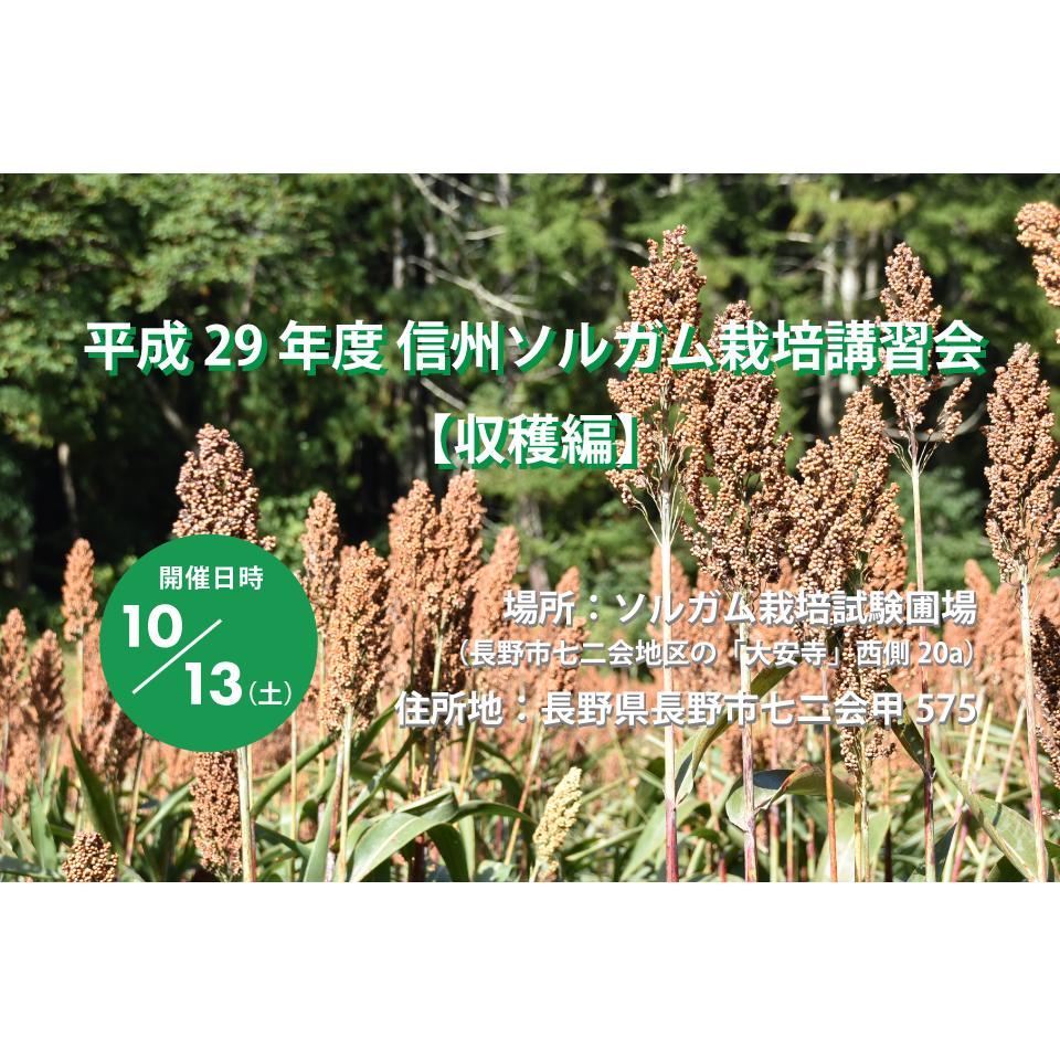 アイキャッチ画像:【開催告知】平成29年度 信州ソルガム栽培講習会(収穫編)