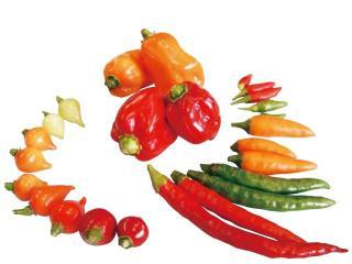 pepper-03.jpg