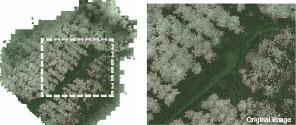 img_forestry02_02.jpg