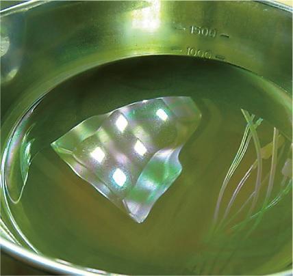 chlorophyll-9.jpg